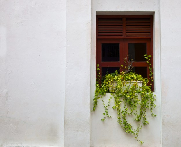 verdancy / cartagena, colombia