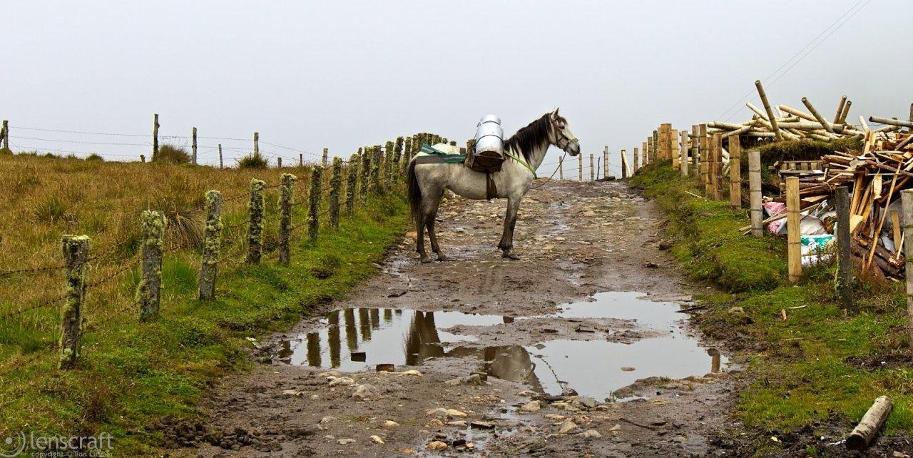 milk horse / los nevados, colombia