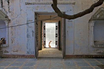 the morning bath / udaipur, india