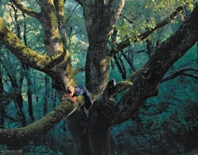 jordan, up the tree / los gatos, california