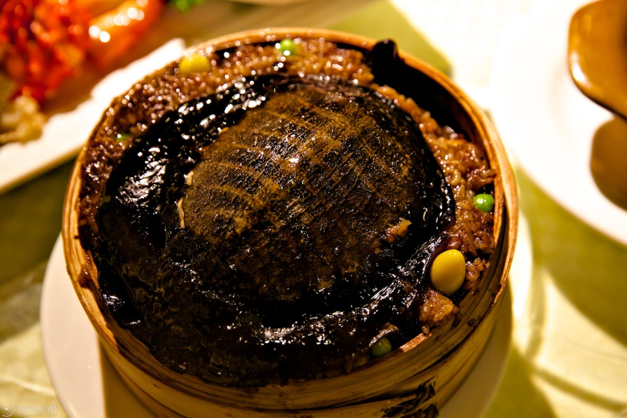 turtle in sticky rice / shanghai, china