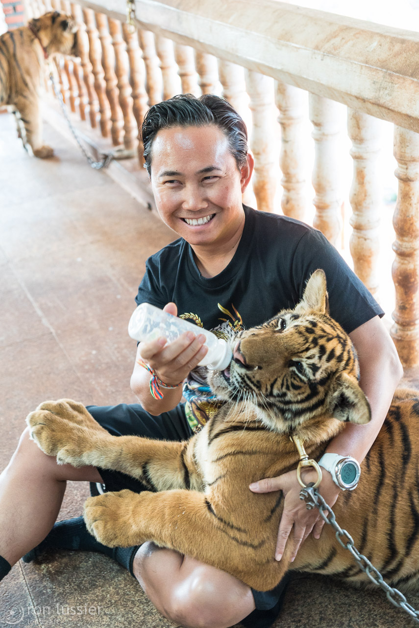 bobby & the tiger / wat pha luang ta bua, thailand
