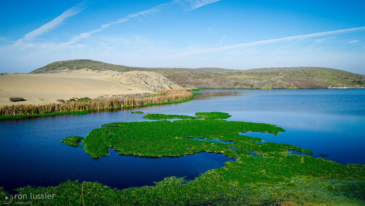 abbott's lagoon / point reyes, california