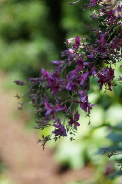 Monochromatic- Can you tell Purple is my favorite garden color?