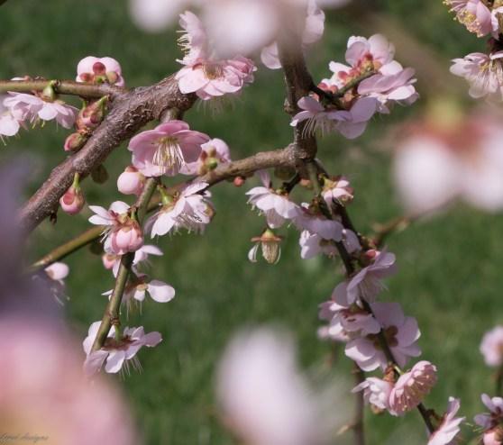 Spring Fling-28