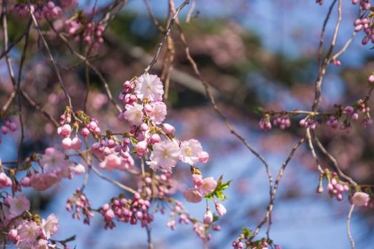 Spring Fling-4