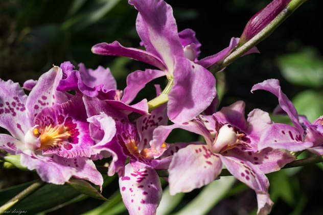 orchid-show_16075844504_o