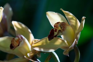 orchid-show_16076017814_o