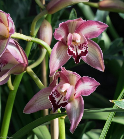orchid-show_16627974718_o