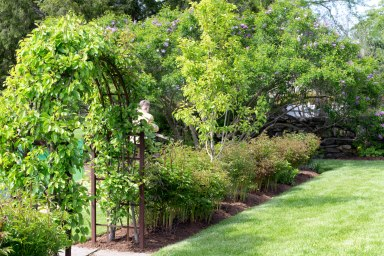 Arbor and Peonies