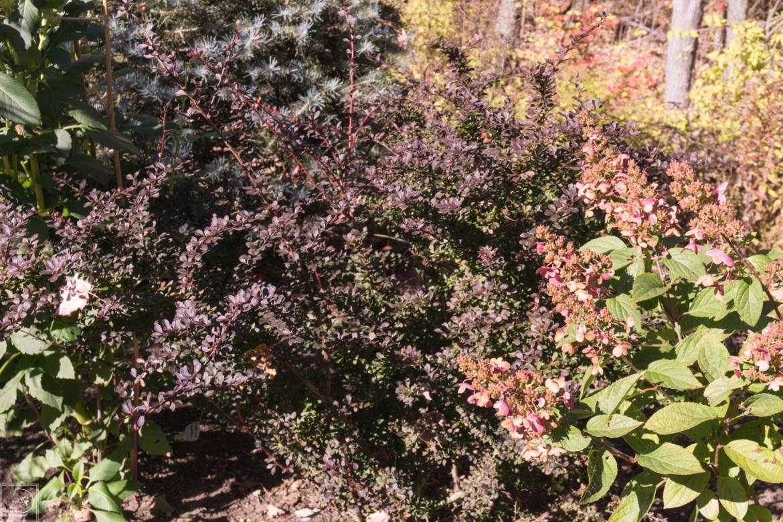 Fall blog-22