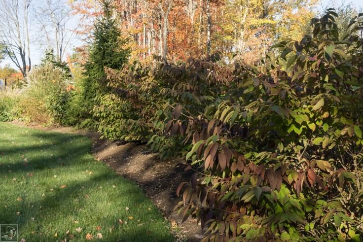 Fall blog-3