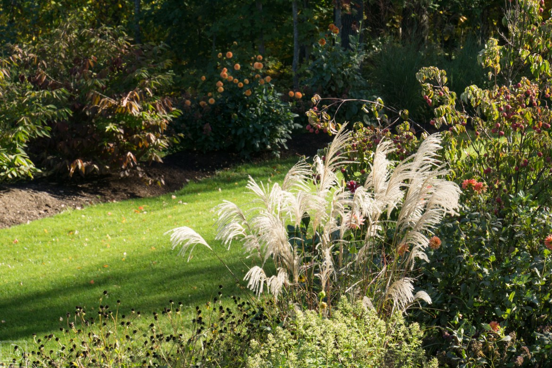 Grasses-1