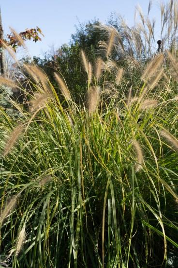 Grasses add in-1