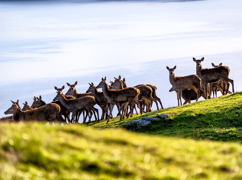 Red Deer-1