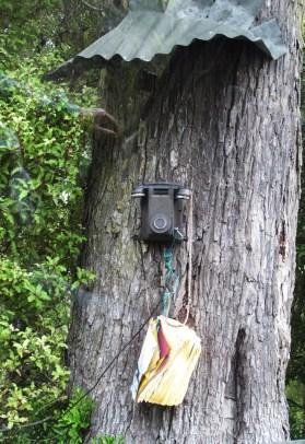classic bush-phone