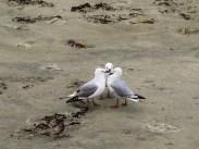 little chat between sea gulls