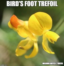 bird meme