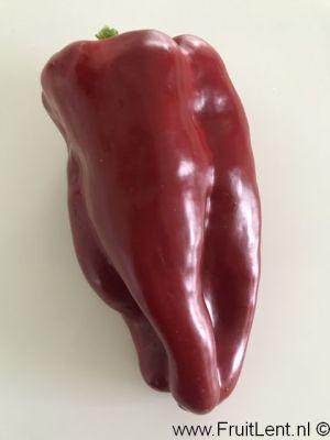 Nocera Rosso