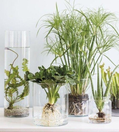 Kultur jaringan tumbuhan