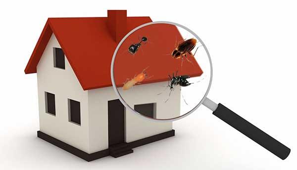 Membasmi Serangga Pengganggu Rumah
