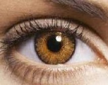 Resultado de imagen de lentillas color miel