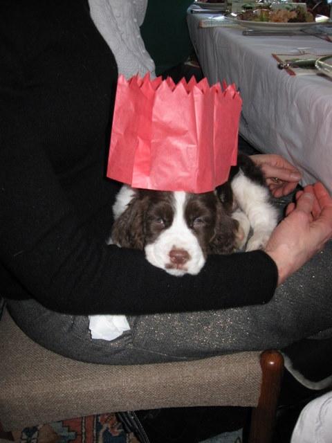 Jupiter reluctantly wears a Christmas cracker hat