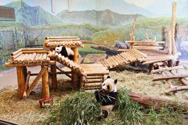 IMG_1492 Pandas copy