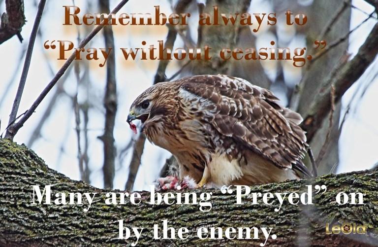 img_4795-hawk-eating-copy
