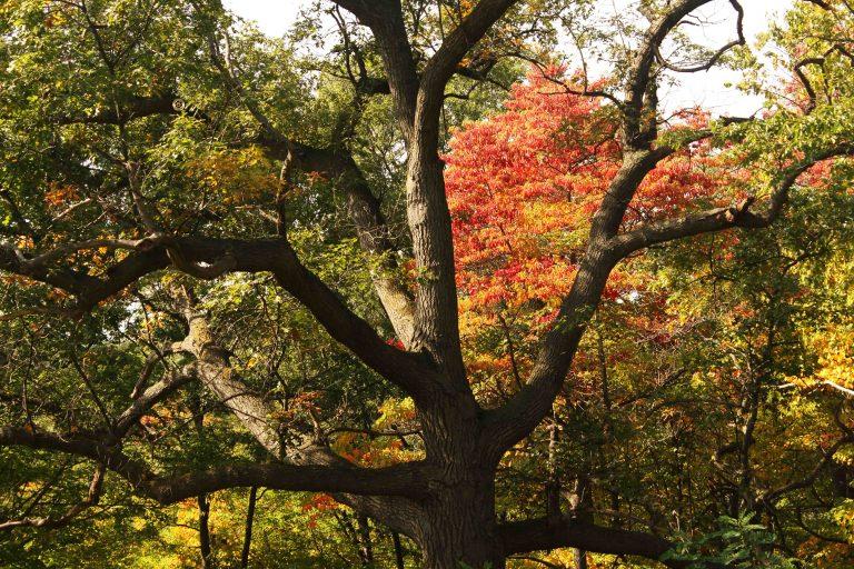IMG_2617 Tree copy