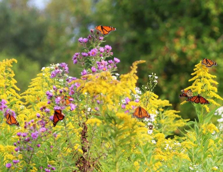 IMG_7548 Butterfly a copy