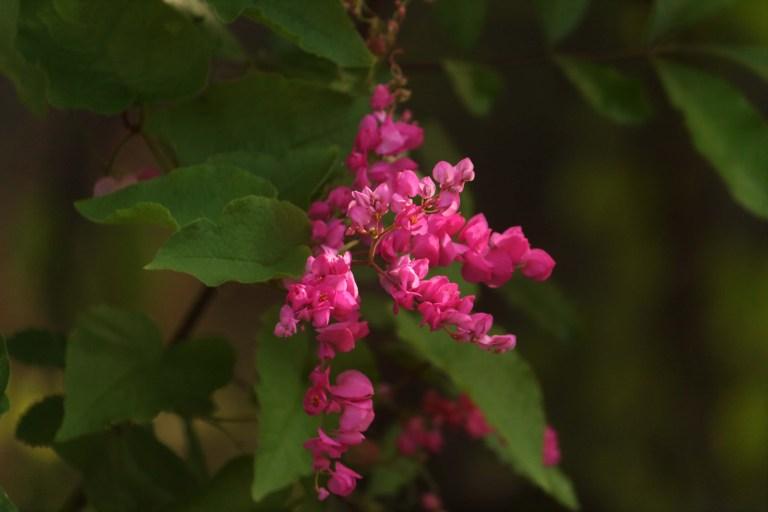 IMG_0351 Flower
