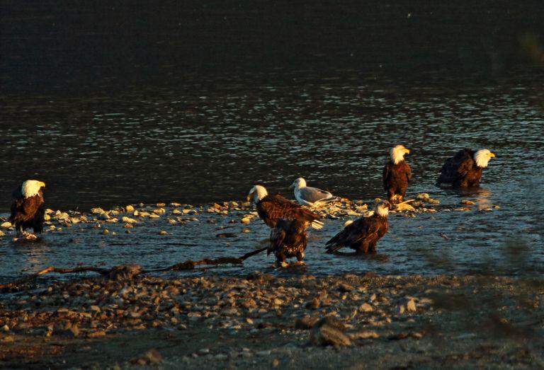 IMG_0644 Sandpiper Sunset.JPG