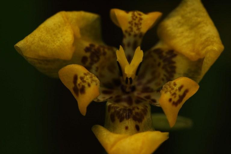 IMG_8112 Flower.JPG