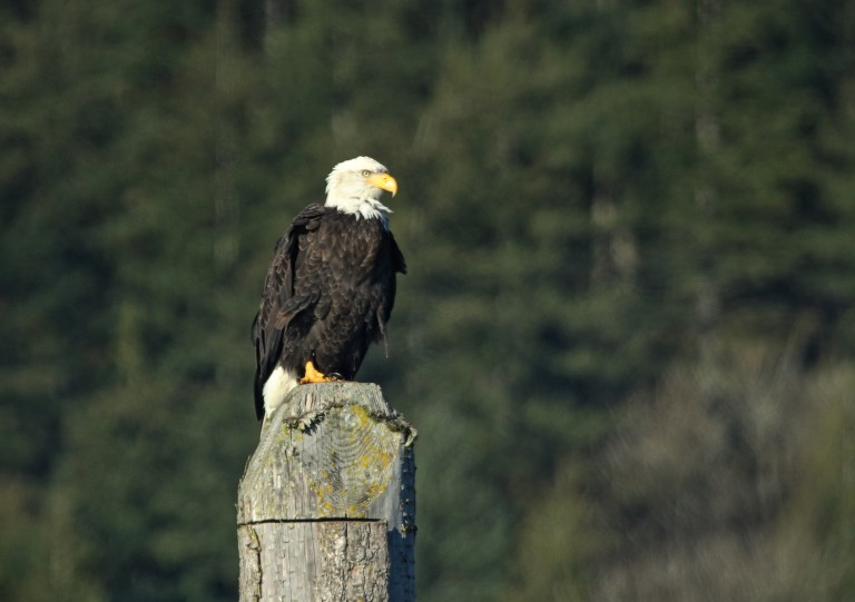 IMG_0725 Eagle.JPG
