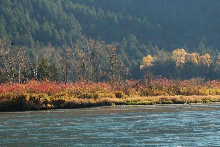 IMG_1216 Frasesr River.JPG