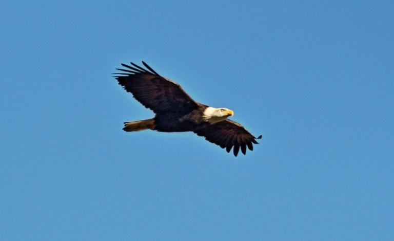 IMG_1646 Eagle.JPG