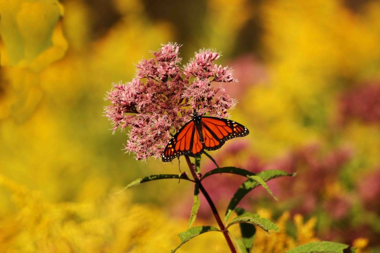 IMG_2316 Butterflya.jpg