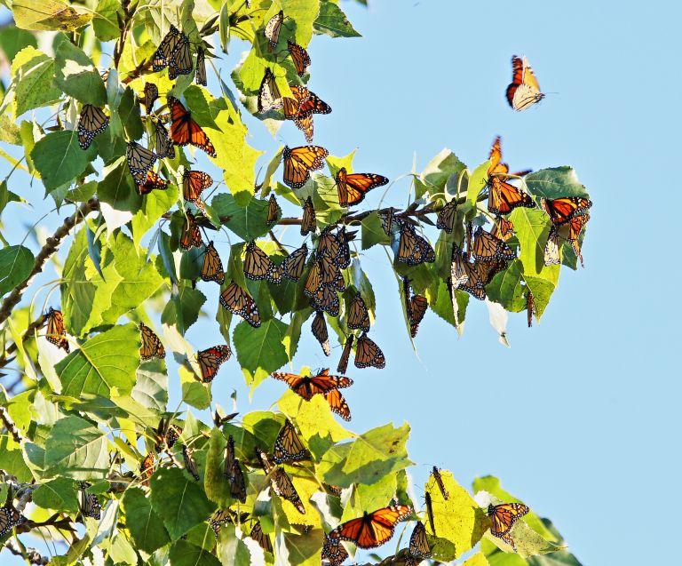 IMG_3068 Butterflies a