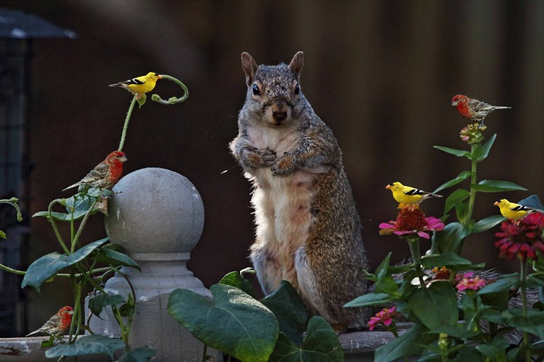 IMG_6237a Squirrel copy