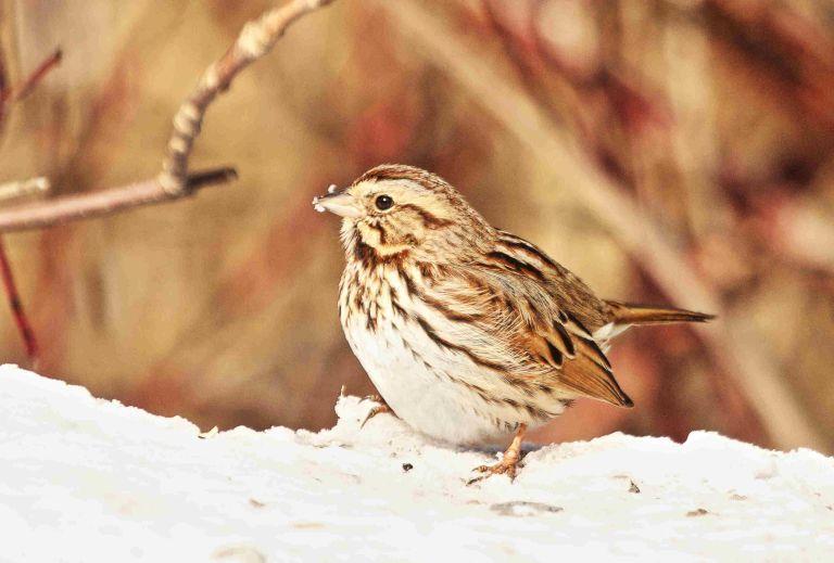 R Sparrow.JPG