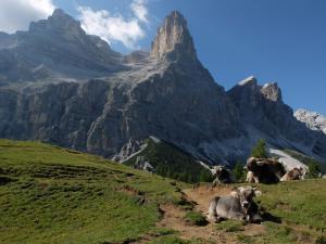 Le mucche e il monte Pelmo