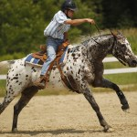 Spotlight On Spots Appaloosa Horses And Their Amazing Spotted Coat Patterns Leonierobertsphotography