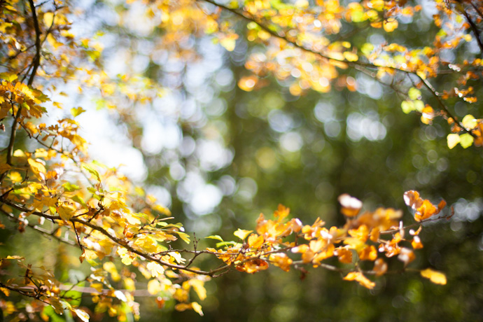 autumn leaves - (c) leonie wise