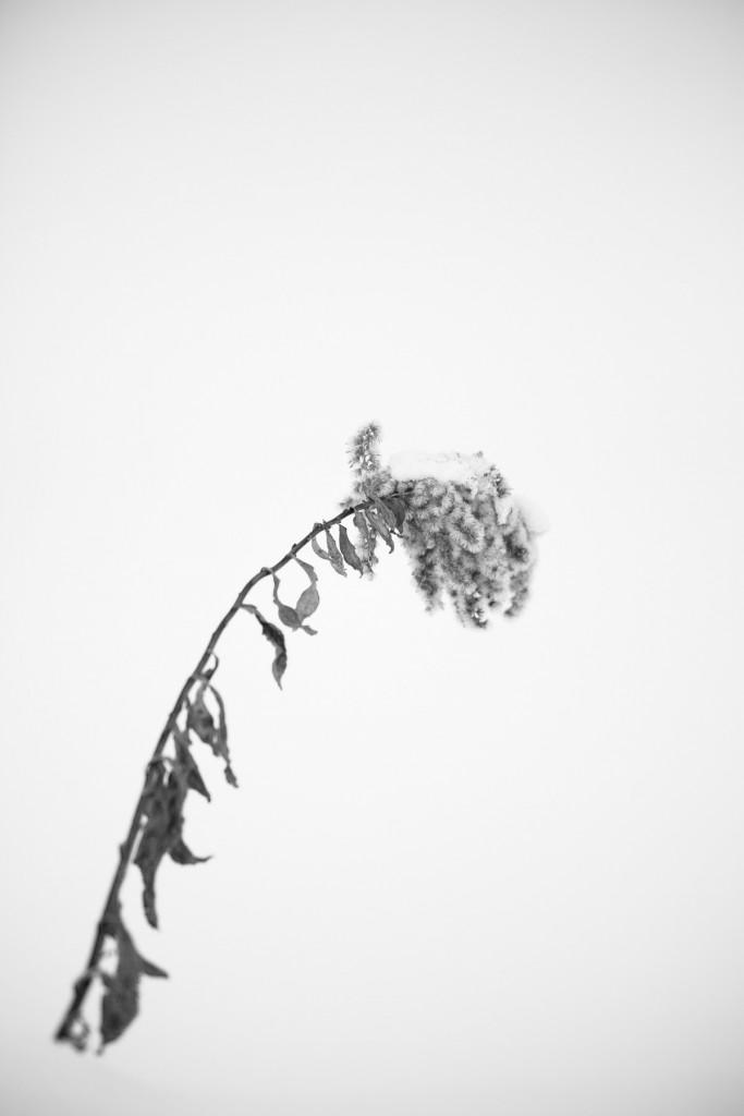 hokkaido-winter-1