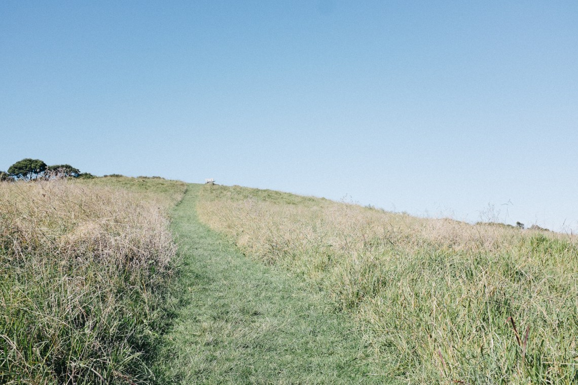 Pathway through the grass in Te Toki reserve by leonie wise