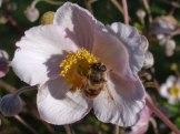 Blume – Biene 8