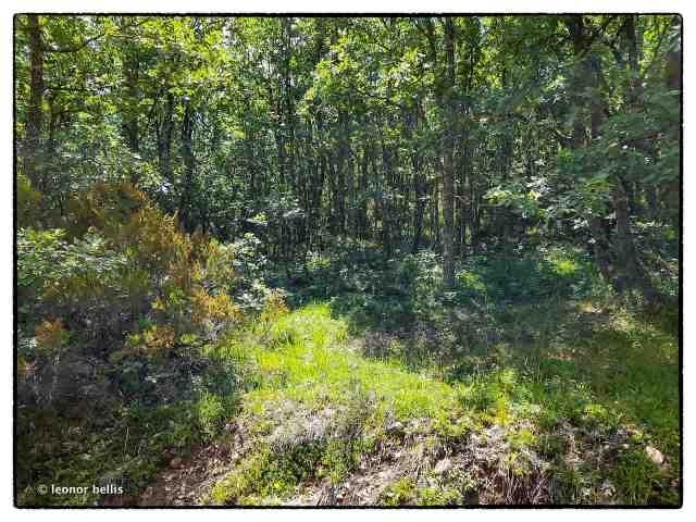 El bosque de Fontanos