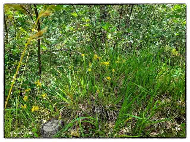 vegetación en Fontanos
