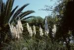 Zambia Botanical Garden